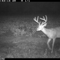 Trail Cams - Xtreme Hunts