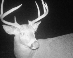 Trail Cams - Xtreme Hunts
